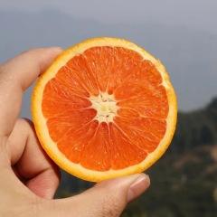 边走边淘 湖北宜昌秭归中华红橙 5斤 包邮