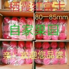 【峻农果品】烟台栖霞红富士苹果80-85mm优质果净重10斤包邮包售后