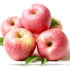 【新鲜水果】延安山地有机红富士苹果 24粒装 大果约9-10斤(单果75mm左右)