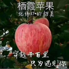 栖霞红富士junnong5特惠果85cm简装2.5kg包邮